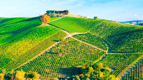 Assurance viticole : les solutions dédiées aux viticulteurs